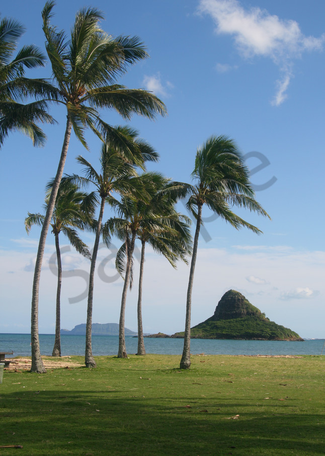Landscape Photography   Palm Trees at Chinaman's Hat by Doreen Decasa