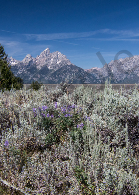 Tetons in the distance