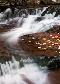 Falling Leaves Art | Scott Cordner Photography