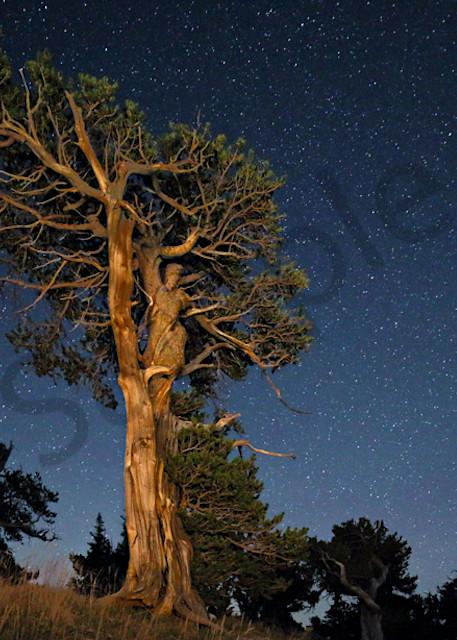 1190 Tree Sprite Art | Cunningham Gallery