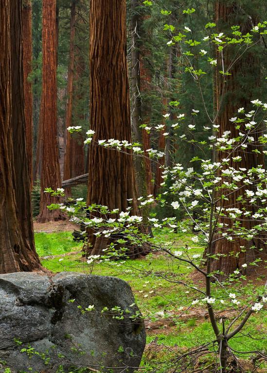 Dogwood And Boulder Art | Scott Cordner Photography