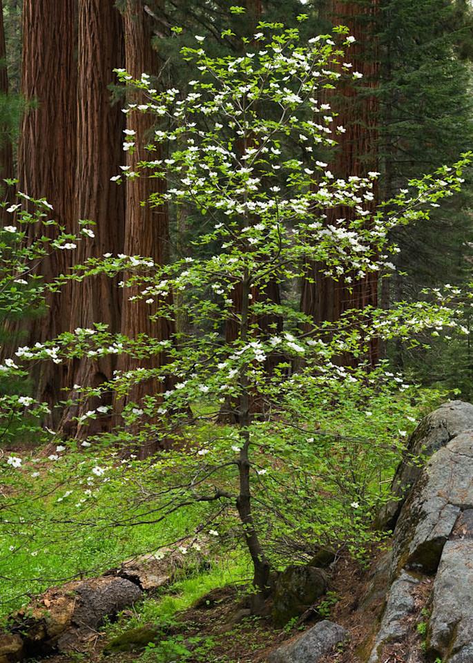 Forest Elegence Art | Scott Cordner Photography