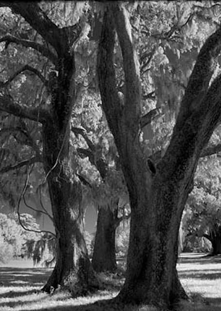 Broadfield Plantation No. Ii Photography Art | Robert Jones Photography