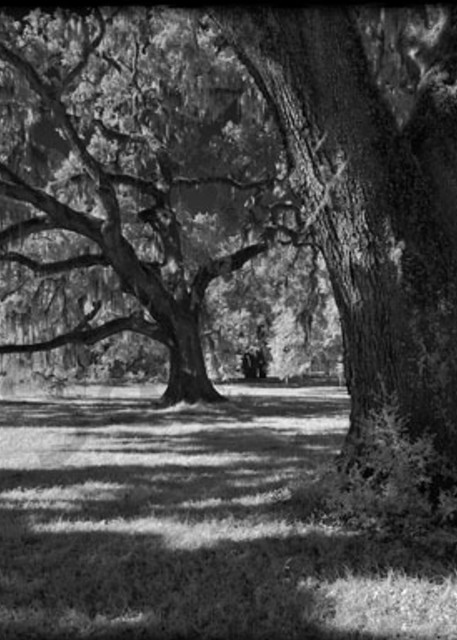 Broadfield Plantation No. I Photography Art | Robert Jones Photography