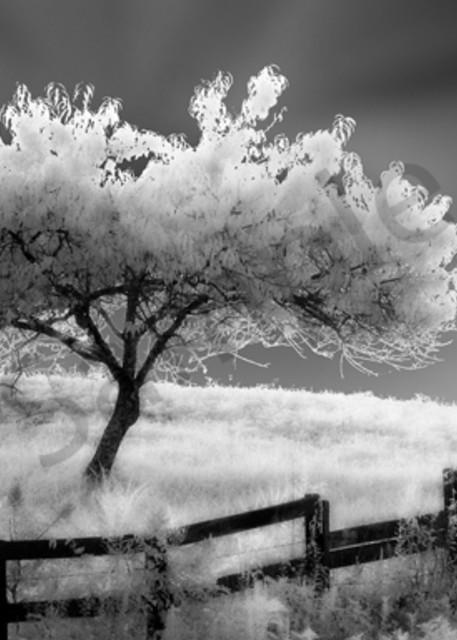 Ethereal Tree Photography Art   Robert Jones Photography