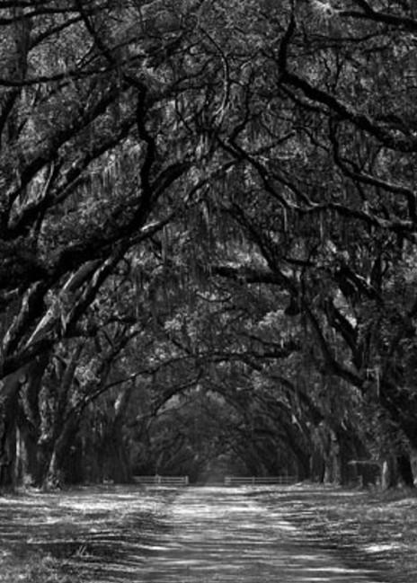 Wormsloe Plantation Photography Art | Robert Jones Photography