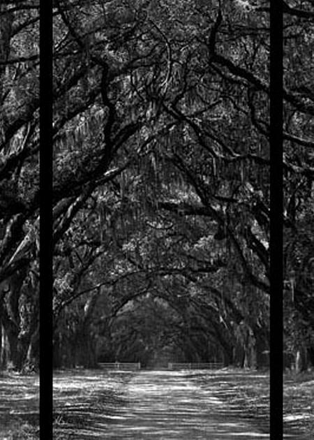 Wormsloe Plantation   Trip Tych Photography Art | Robert Jones Photography