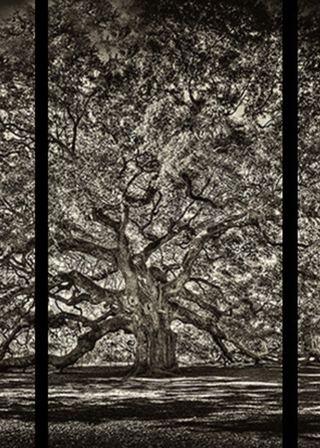 Angel Oak   Trip Tych Photography Art | Robert Jones Photography