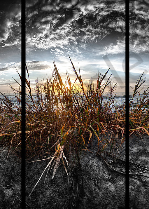 Sea Oats   Trip Tych Photography Art | Robert Jones Photography