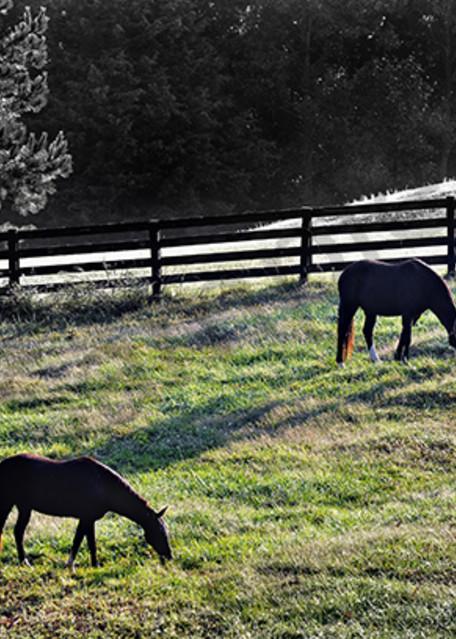 Out To Pasture Photography Art | Robert Jones Photography