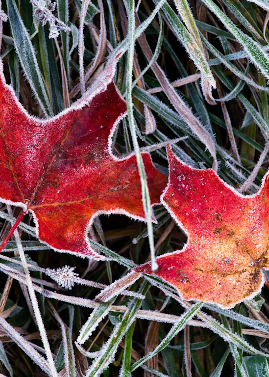 First Frost Art | Scott Cordner Photography
