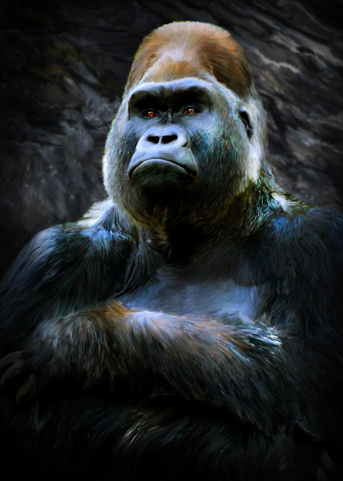 Harambe,  gorilla who was killed at the Cincinnati Zoo