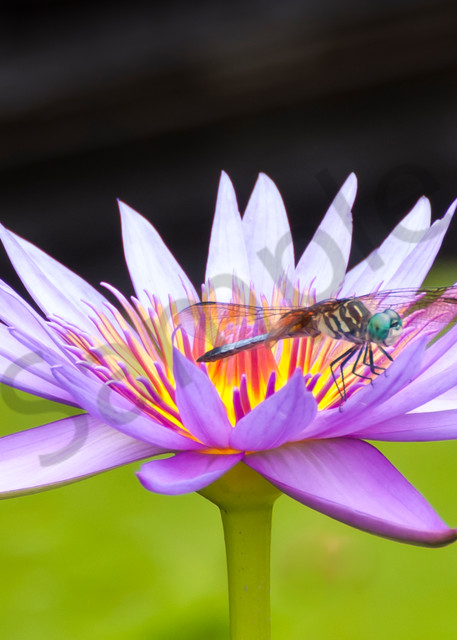 Flower Wall Art: Dragonfly On Guard