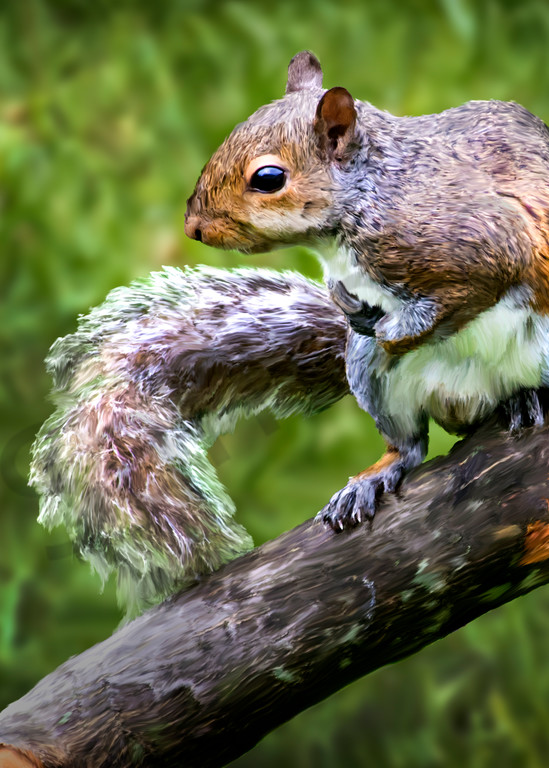 Chipper, a digital painting of a squirrel sitting on tree branch.