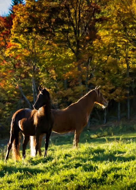 Mares   Catskills In Autumn Photography Art   HoofPrintsFineArt