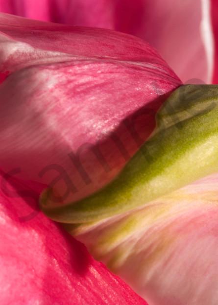 Parrot Tulip-#3