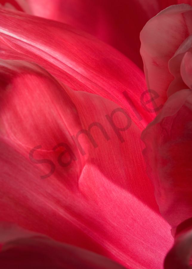 Parrot Tulip-#8