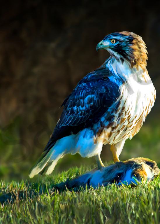 Digital art painting of a hawk in nature.