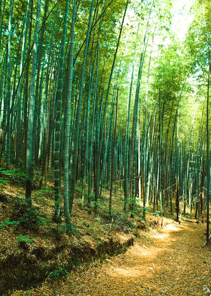Bamboo grove in Sagano area of Kyoto, Japan