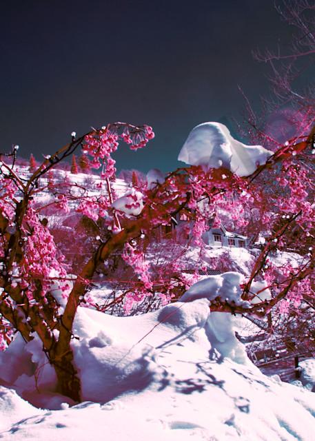 Pinktree, Sundance, Snow