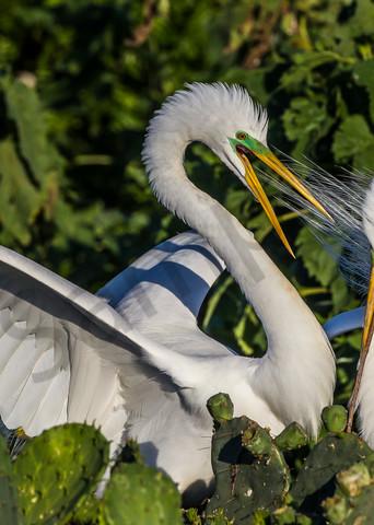 Mating Magic Photography Art | John Martell Photography