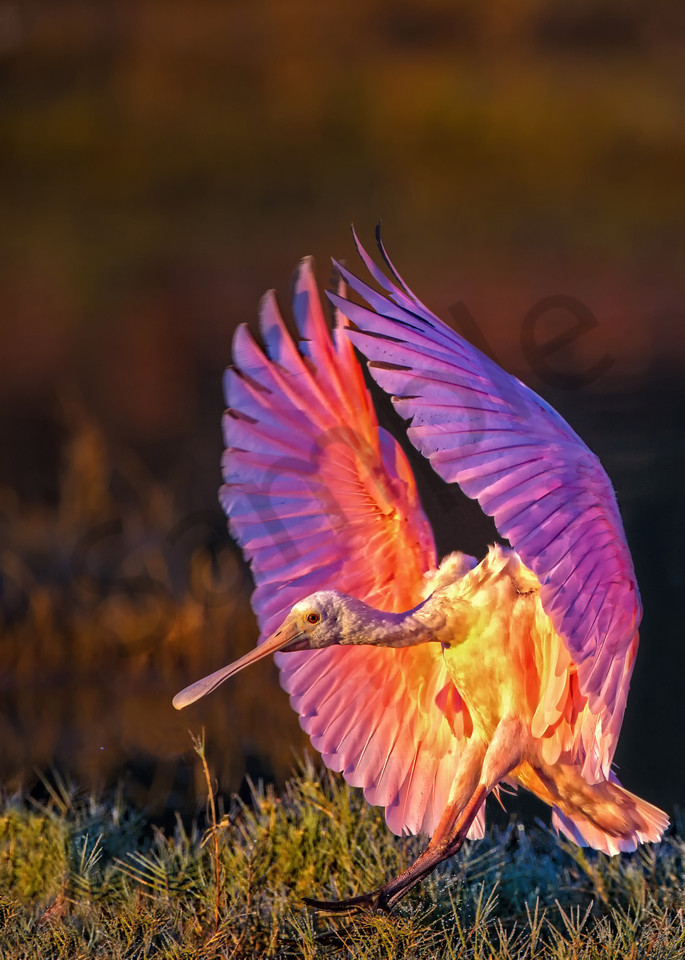 Early Landing Photography Art | John Martell Photography