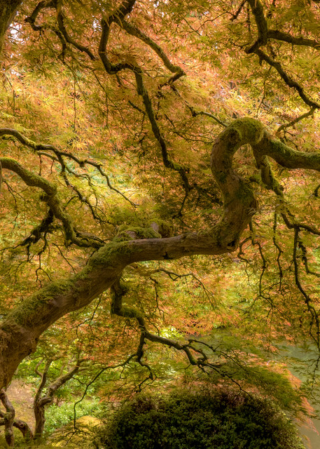 enchanted Japanese maple garden of Oregon - fine art photography prints