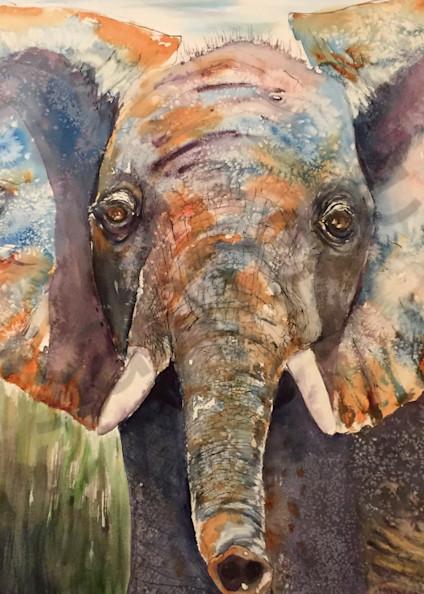 Ambose the Elephant