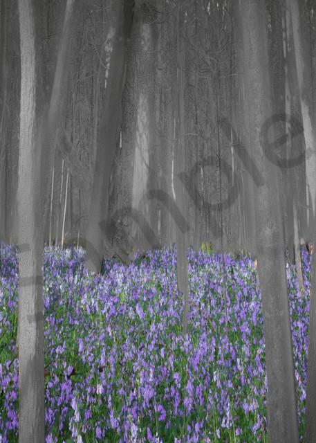 Spring Awakening - art - JP Sullivan Fine Art Photography - photographs