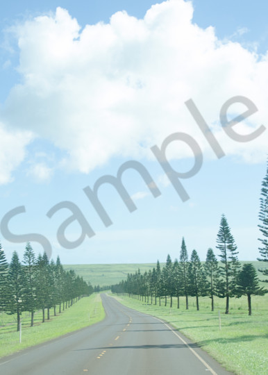 Lanai tree-lined road art photo for sale