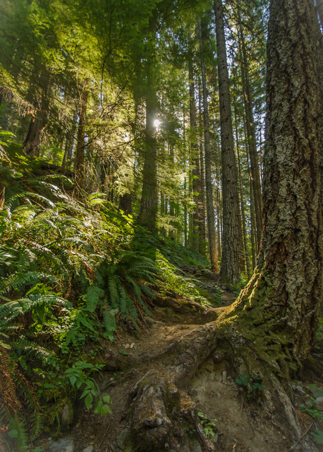 Sunlit Tree Path Photography Art | Barb Gonzalez Photography
