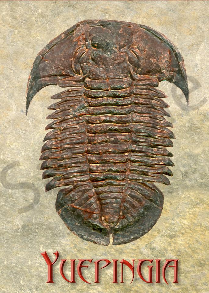 Yuepingia Fossil Trilobite