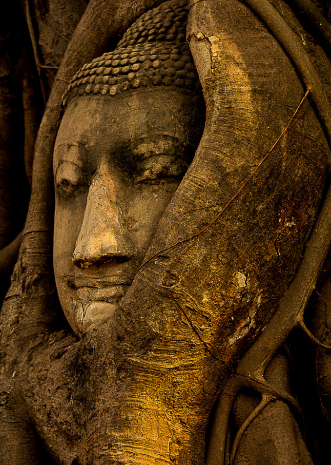 Buddha statue wrapped by tree roots, Ayuthaya, Thailand