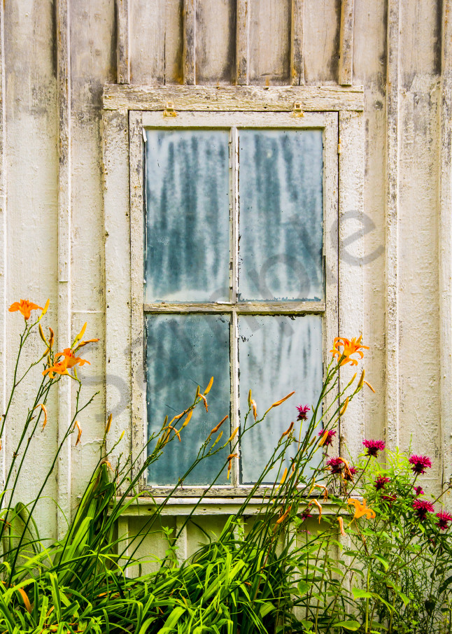 Fine art photograph of orange and purple flower in front of old bluish window