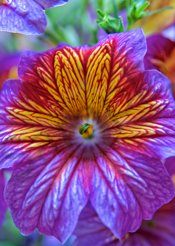 Beautiful purple bloom - spring flower - art prints - photography fine art prints