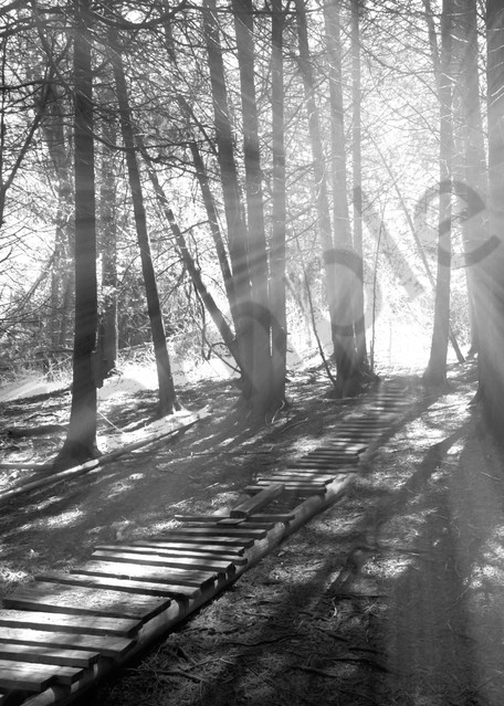 Black & white photograph of light rays through the forest for sale as fine art by Sage & Balm