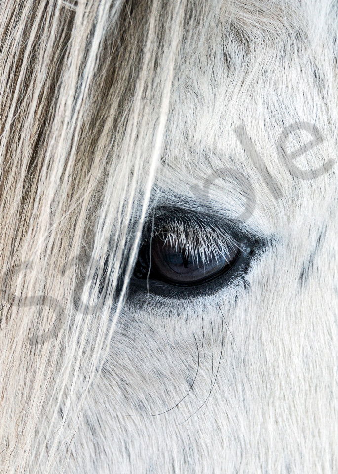 Fine art photograph of close-up of eye on white Icelandic horse