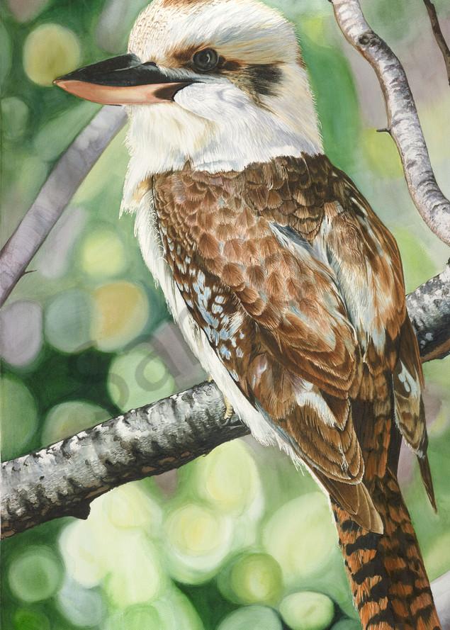 Kookaburra Contentment