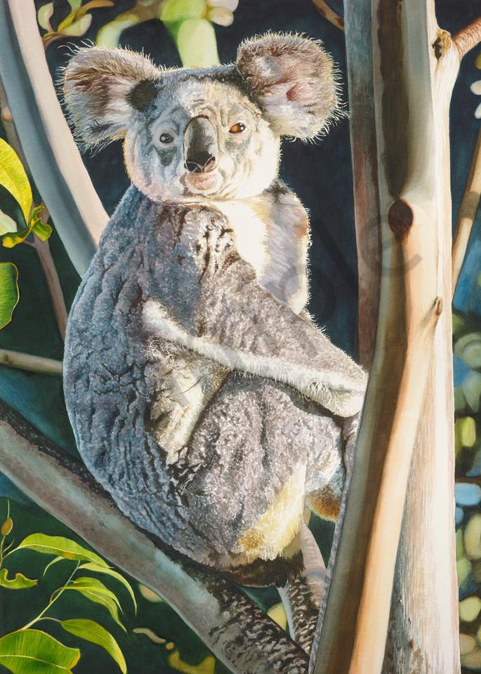Samford Koala