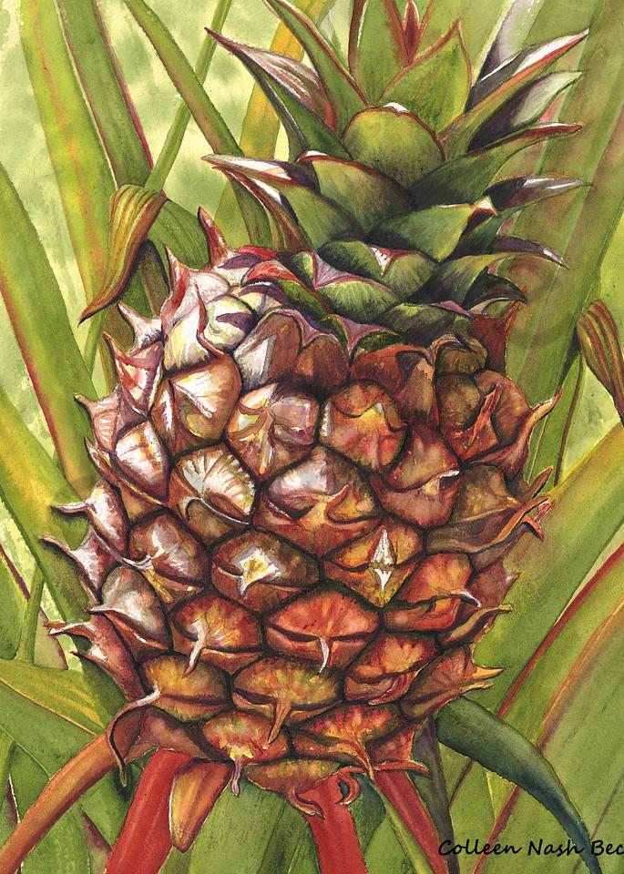Wild Pine Apple Art | ColleenNashBecht