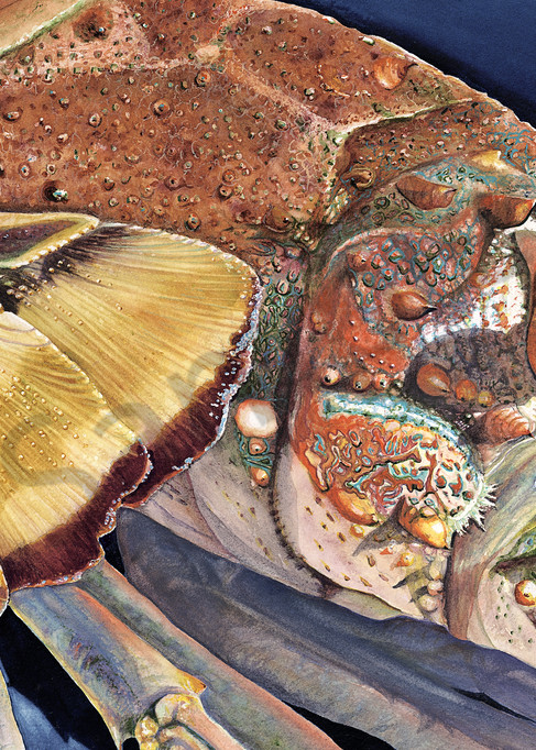 Eye For De Tail Lobsters Art | ColleenNashBecht