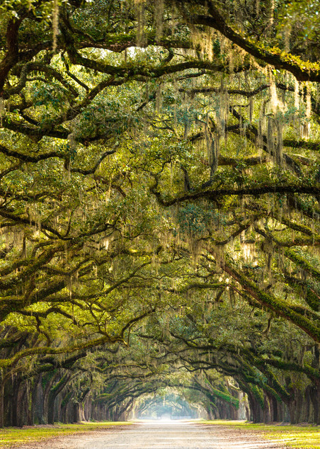 Wormsloe Photograph for Sale as Fine Art