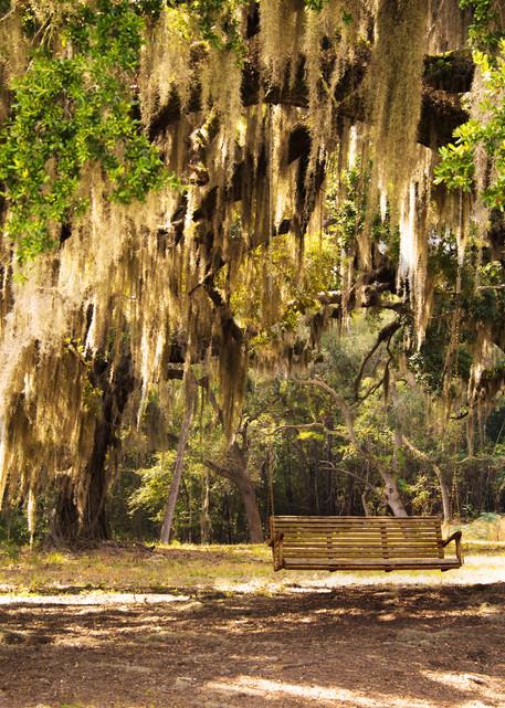 Southern Plantation Oak Tree Photograph for Sale as Fine Art