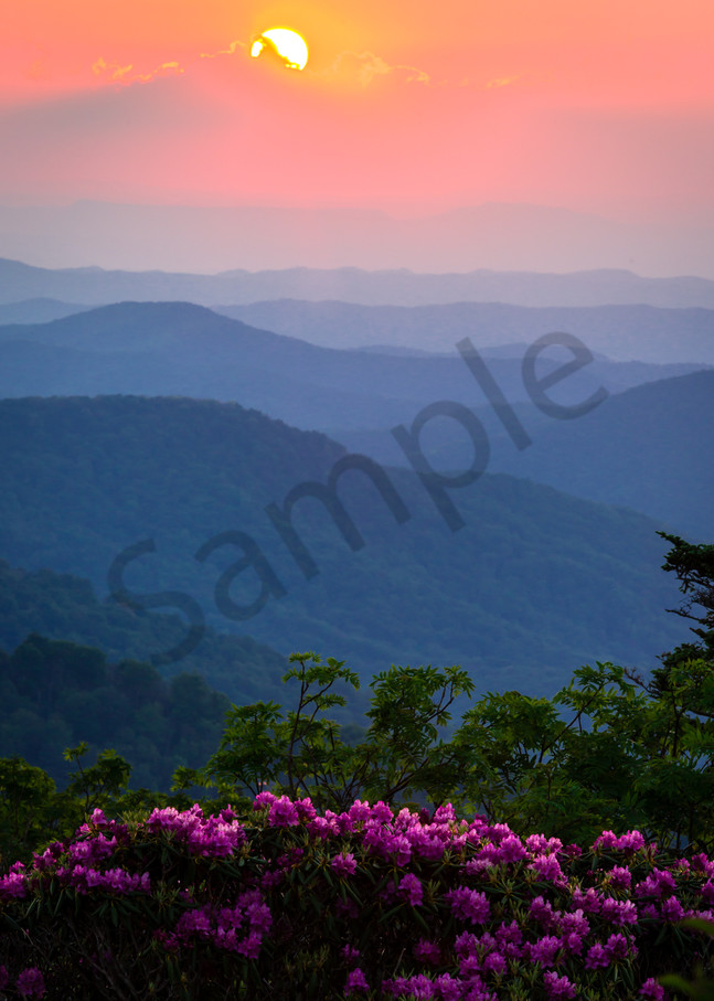 Mountain Spring Bloom Photograph for Sale as Fine Art