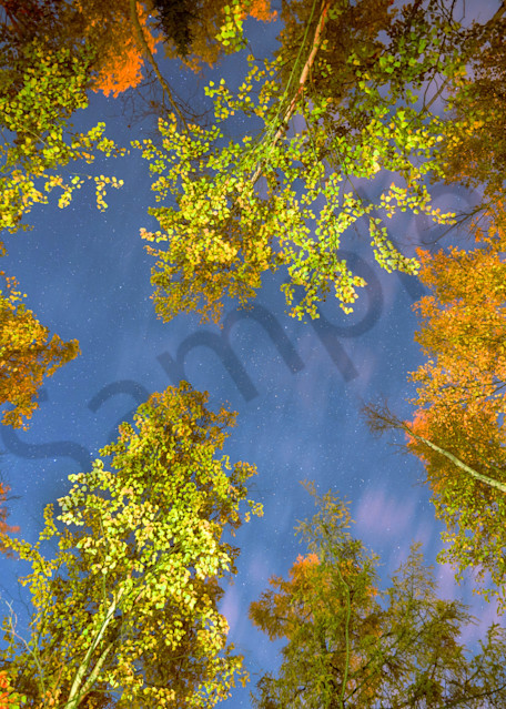 Night Sky In the Fall Photograph for Sale as Fine Art