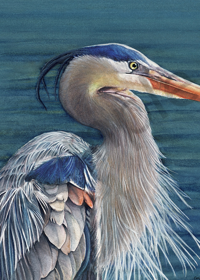 Blue Heron Art   ColleenNashBecht