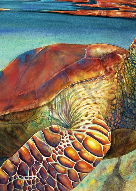 Surface To Air Sea Turtle Art   ColleenNashBecht