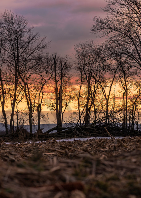 Winter Trees | Susan J Photography