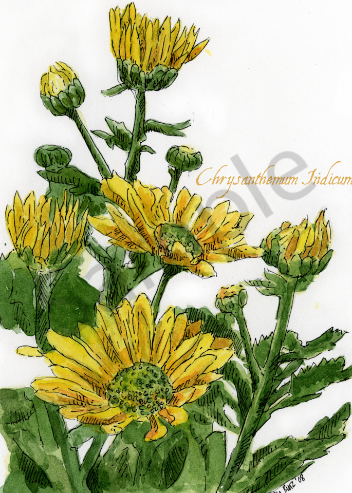 Nov   Chrysanthemum Art | Geoffrey Butz Art & Design Inc
