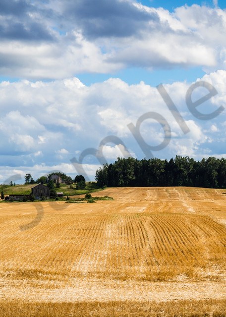 Summer Wheat Fields Photography Art | Sage & Balm Photography